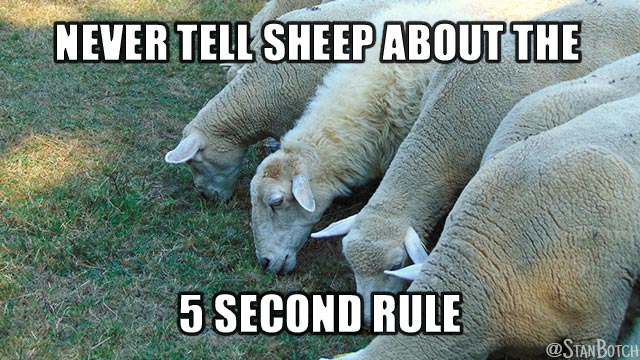 Sheep eating grass meme: Never tell sheep about the 5 second rule.