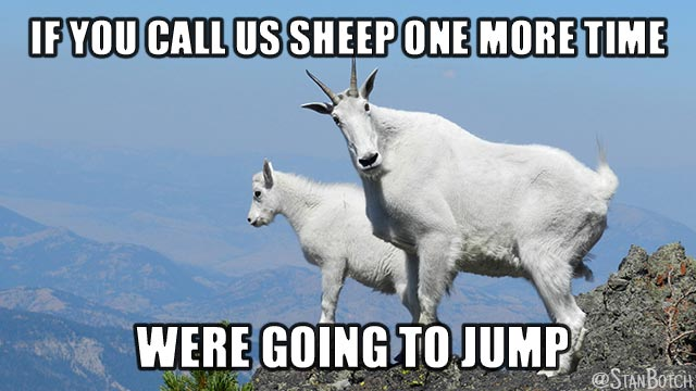 Two mountain goats meme: If you call us sheep one more time were going to jump.