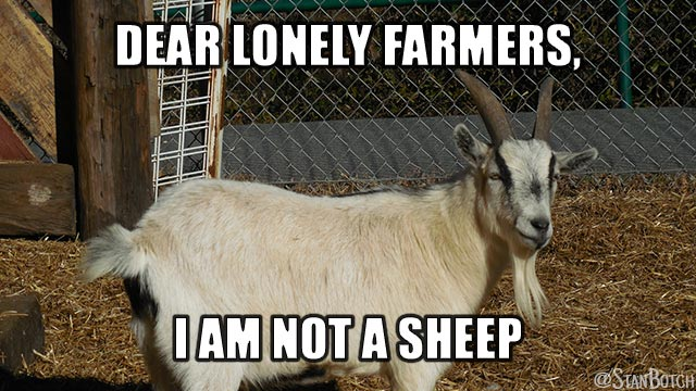 Angry goat meme: Dear Lonely Farmers, I am not a sheep.