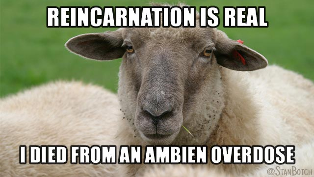Sleepy sheep meme: Reincarnation is real, I died from an Ambien overdose.