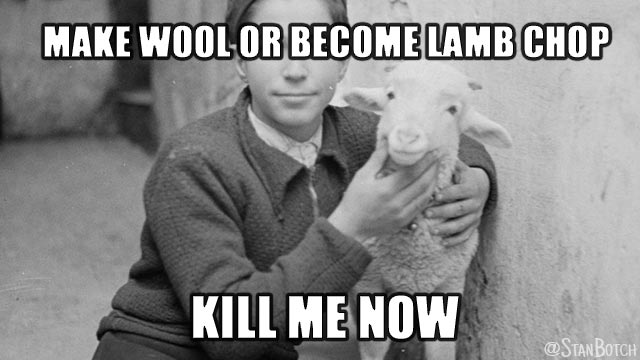Boy holding a lamb meme: Make wool or become lamb chop? Kill me now.